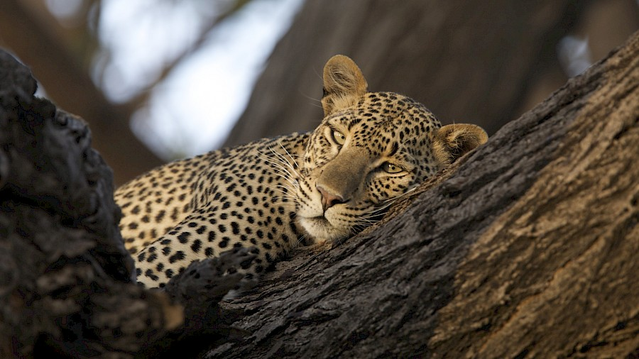 LUXE REIZEN  - TRAVEL IN LUXURY - LUXURY IS TRAVELLING_LUXURY SAFARIS **OUT OF AFRICA