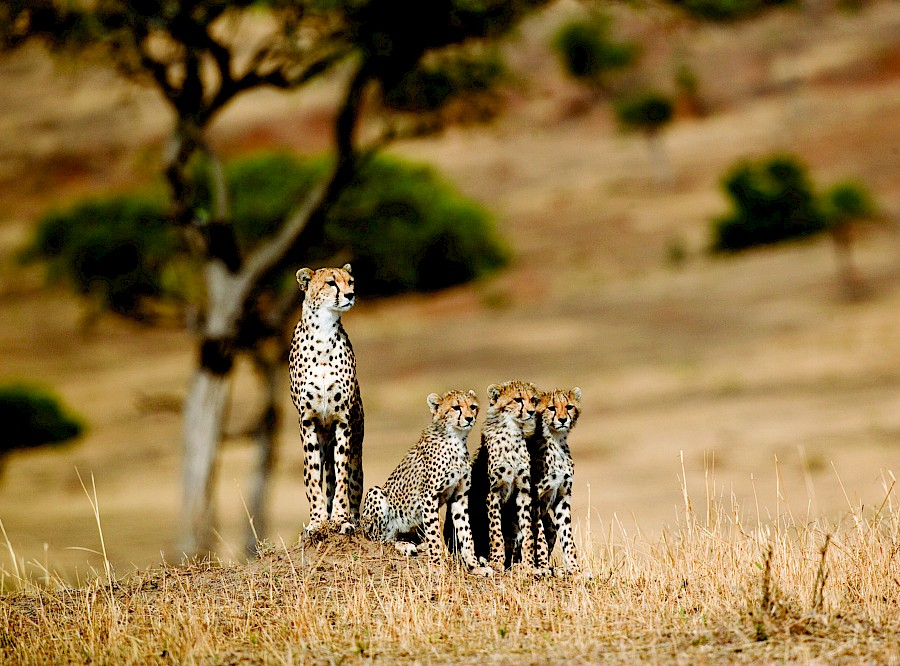 LUXE REIZEN  - TRAVEL IN LUXURY - LUXURY IS TRAVELLING  TANZANIA_LUXE SAFARIS TANZANIA**TREASURES OF TANZANIA